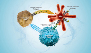 Immune Therapy and Cancer